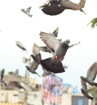 Gel Repelente para Aves y Palomas