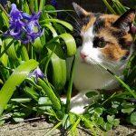 Plantas Repelentes de Gatos