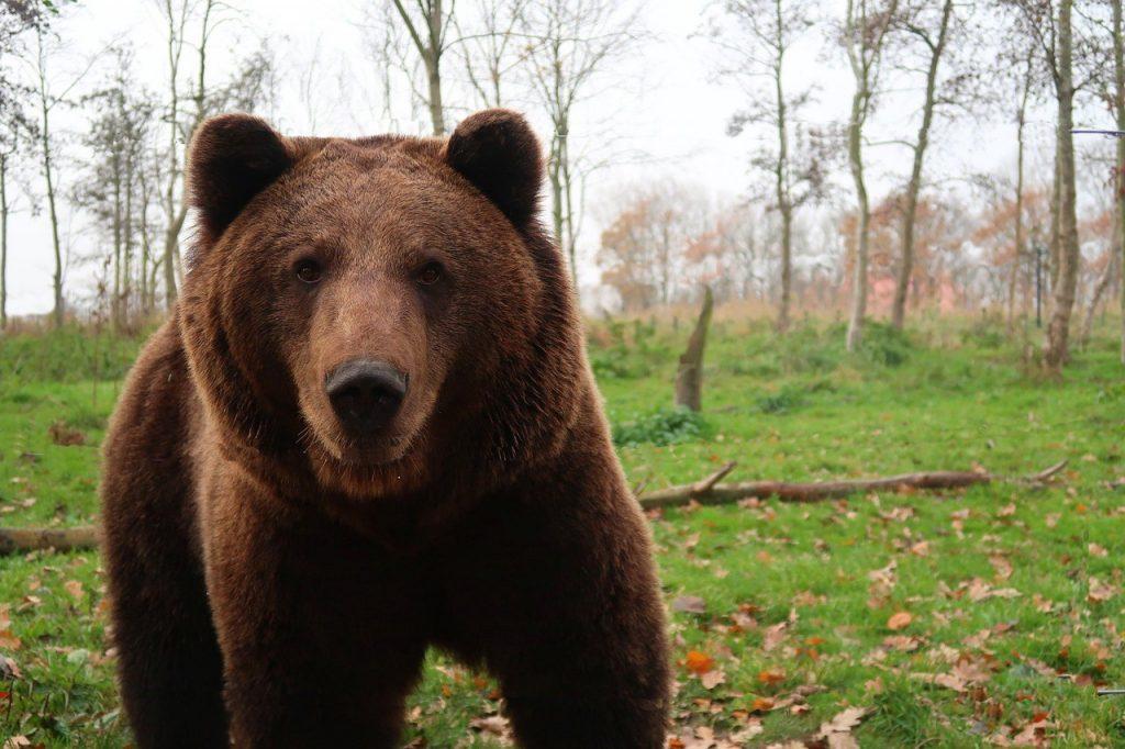 Spray anti osos imagen